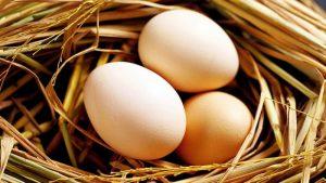 Ngủ mơ thấy trứng gà, vịt là hiện tượng tâm lý bình thường