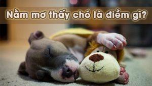 Giấc mơ thấy chó