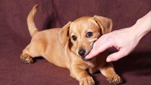 Chó cắn vào tay