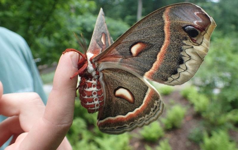 Bươm bướm bay vào nhà thường là điềm lành