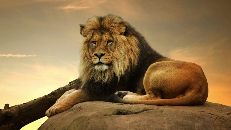 tính cách cung sư tử qua từng ngày sinh