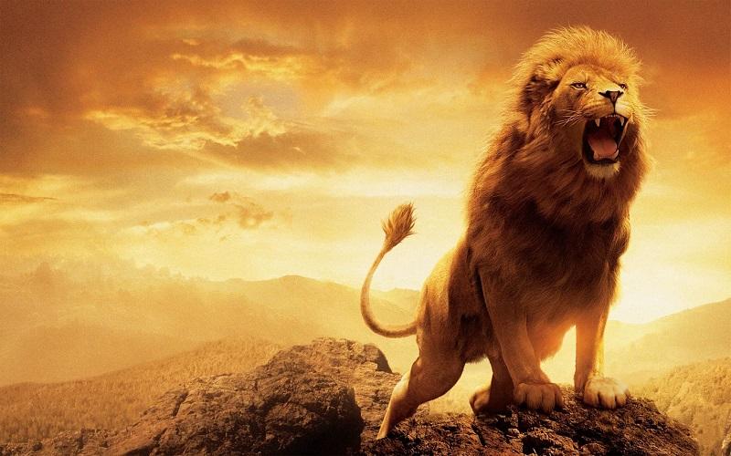 Hãy hiểu tính cách của Sư Tử Nam để chinh phục chàng thành công