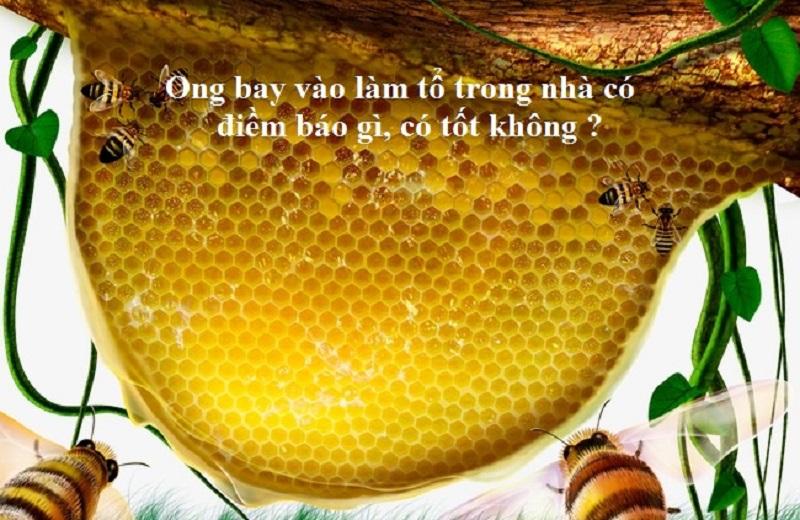 Điềm báo khi ong làm tổ trong nhà