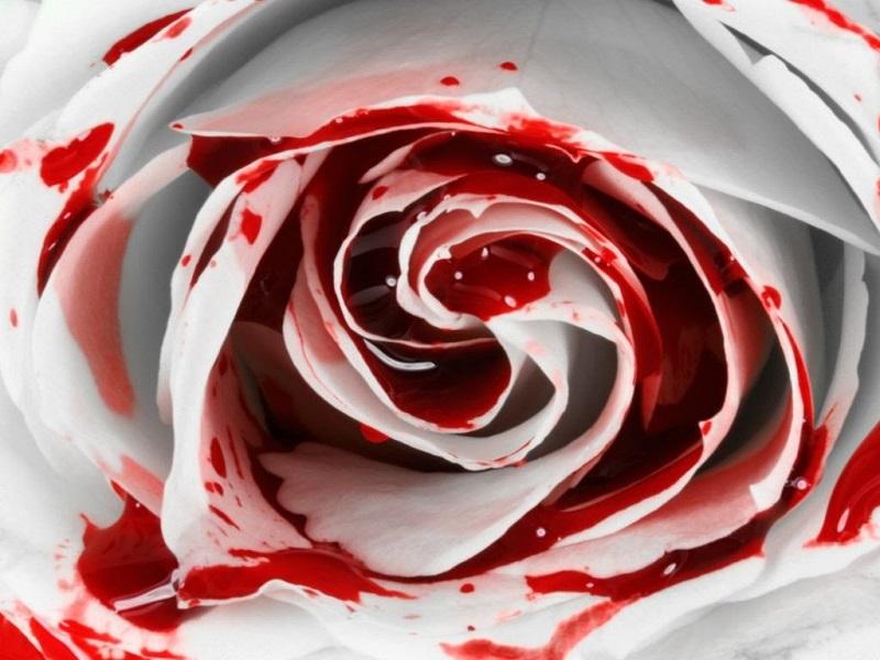 Mơ thấy máu dính trên hoa hồng