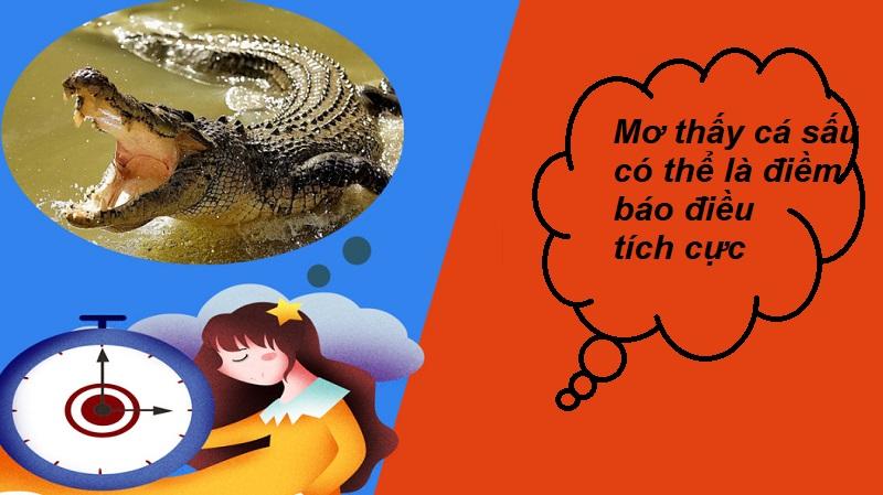Mơ thấy cá sấu có thể là điềm báo tích cực