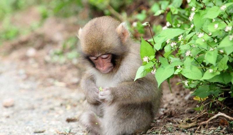 Có nhiều điềm báo khác nhau khi mơ thấy khỉ