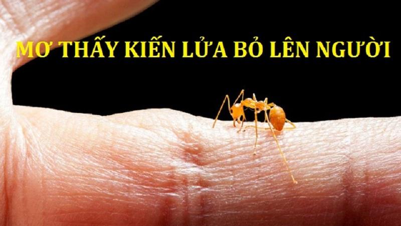 Mơ thấy con kiến lửa là điềm gì? Số mấy