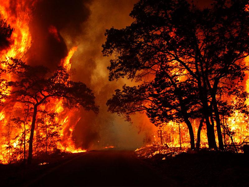 Mơ cháy rừng là điềm gì?