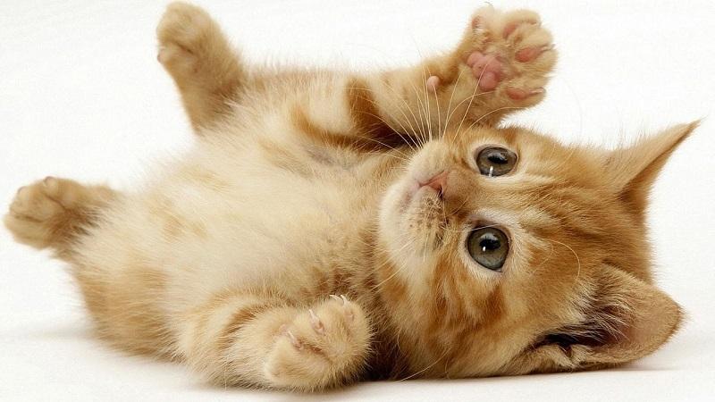 Mơ thấy mèo mang nhiều điềm xui hơn điềm lành