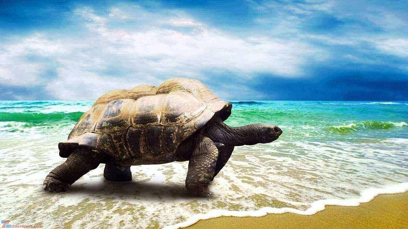 Mơ thấy rùa có nhiều điềm báo khác nhau