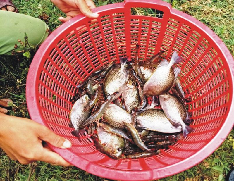 Mơ thấy tôm cá có thể liên quan tới những con số may mắn