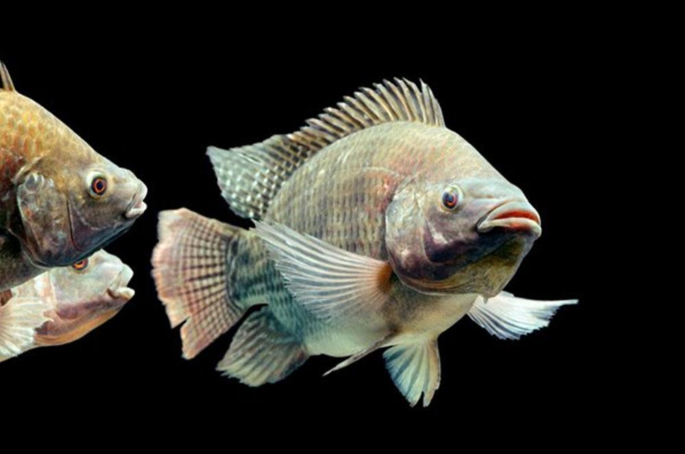 nằm mơ thấy cá to