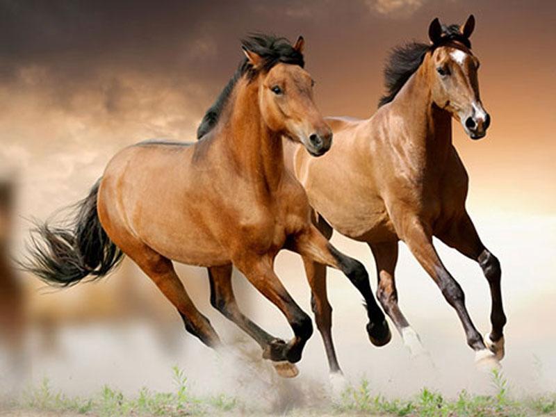 Ý nghĩa của con ngựa trong phong thủy