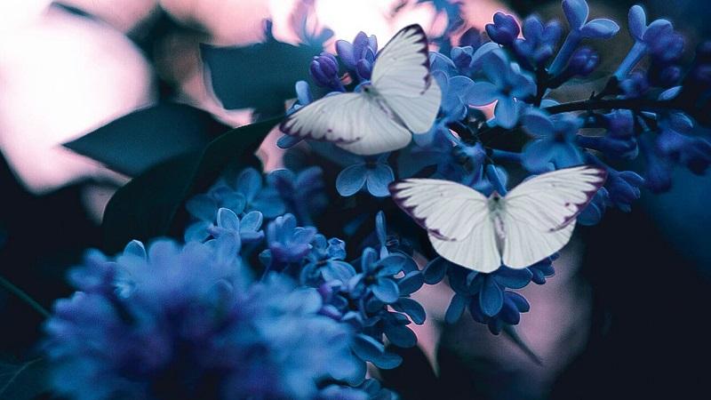 Mơ thấy con bướm số mấy trong lô đề?