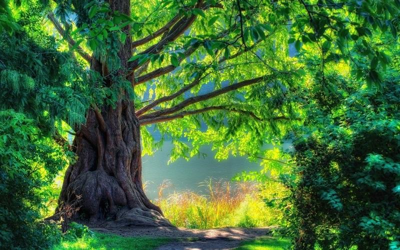 Mơ thấy cây to lớn báo hiệu tài lộc đang đến