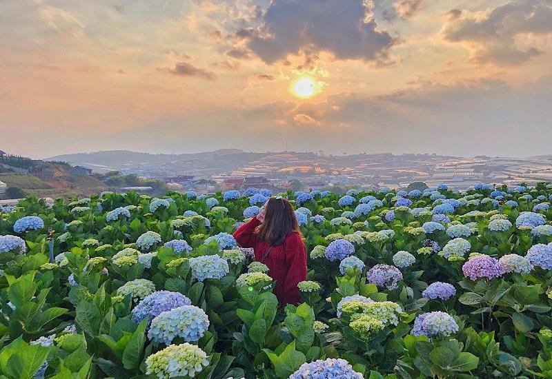 Mơ thấy mình đi lạc đường vào vườn hoa là điềm tốt
