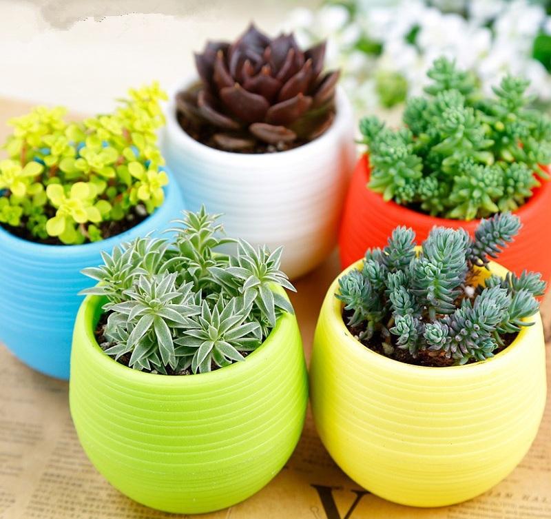 Chọn chậu cây phong thủy trong nhà phù hợp sẽ tăng thêm sinh khí cho bản mệnh