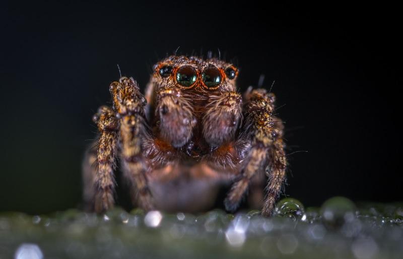 Mơ thấy nhện báo hiệu điềm gì?