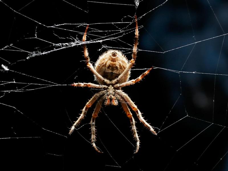 Giải mã bí ẩn giấc mơ thấy nhện và con số may mắn cho dân lô đề, xổ số