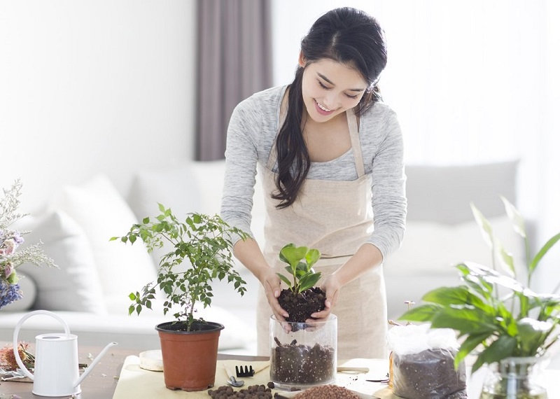 Cần chọn con số phù hợp với giấc mơ trồng cây