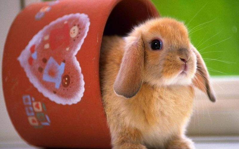 Giấc mơ thấy thỏ có thể ứng nghiệm với những con số đem lại may mắn khi chơi lô đề