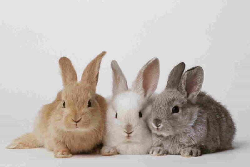 Mơ thấy thỏ có thể là điềm lành hoặc điềm gở