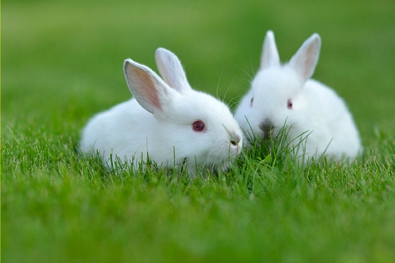 Mơ thấy thỏ có ý nghĩa gì? Đánh con gì dễ ăn nhất?