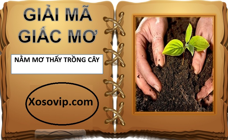 Nằm mơ thấy trồng cây là hên hay xui? Đánh con gì dễ ăn?