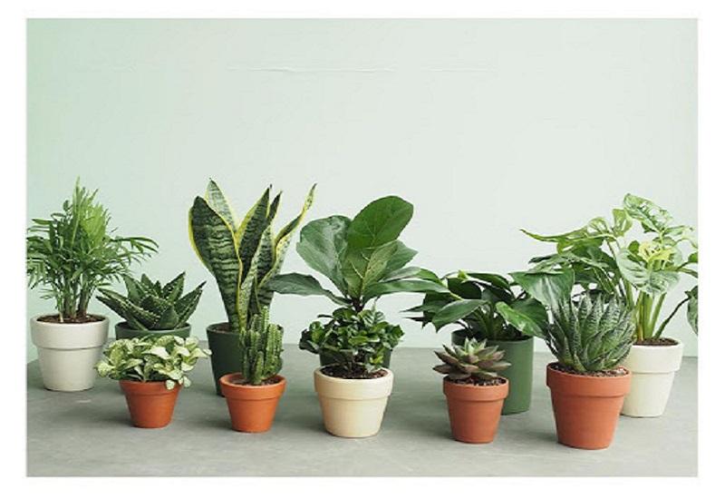 Tìm hiểu một số loại cây hợp phong thủy