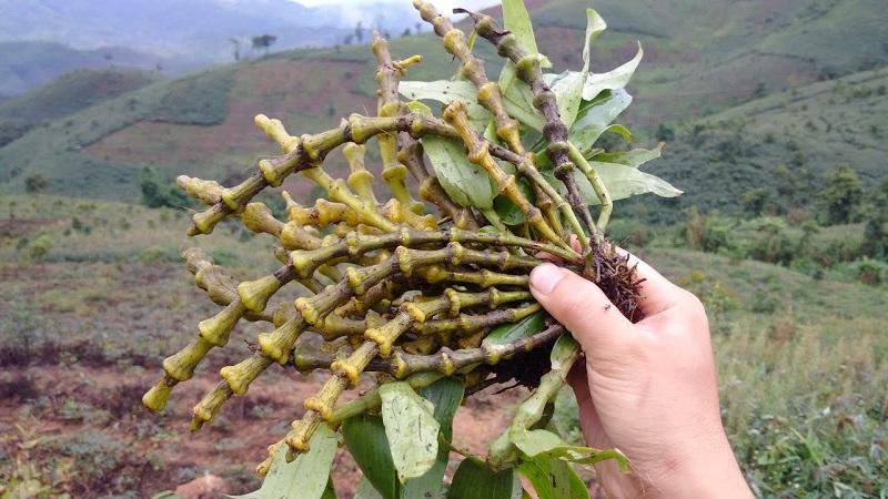 Lưu ý vị trí đặt các loài cây phong thủy cũng như cây trúc quan âm